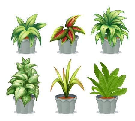 potting soil: Illustration of green leafy plants on a white background Illustration