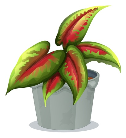 Illustration of a plant in a pot on a white background Stock Vector - 17821526