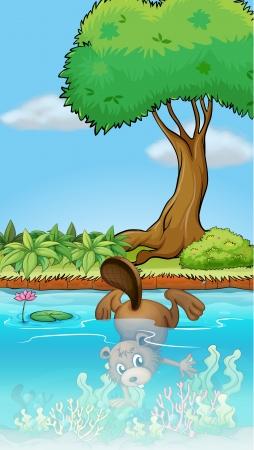 nutria caricatura: Ilustración de un castor buceo bajo el agua Vectores