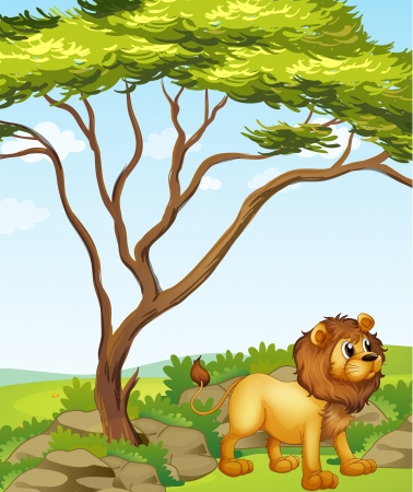 Illustration of a lion at the right side of a big tree Stock Vector - 17821557