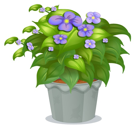 plant pot: Illustration of a plant with flowers on a white background