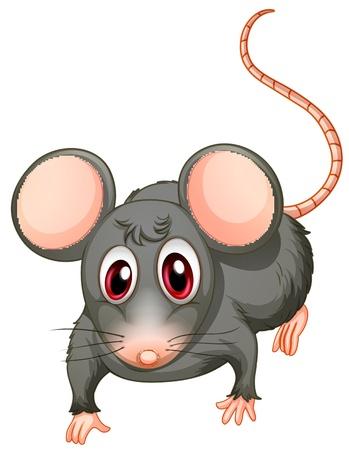 raton caricatura: Ilustración de un ratón joven en un fondo blanco