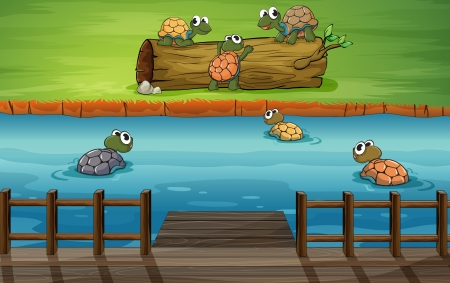 carapace: Illustration of a group of turtles at the river Illustration