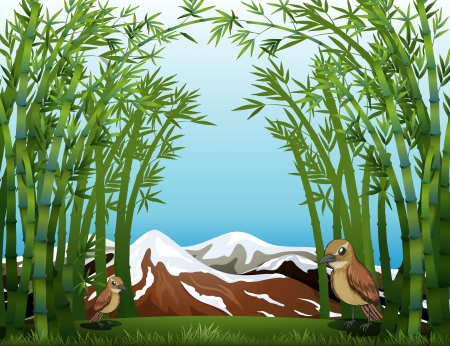 Illustration of a bamboo forest view Stock Vector - 17867885