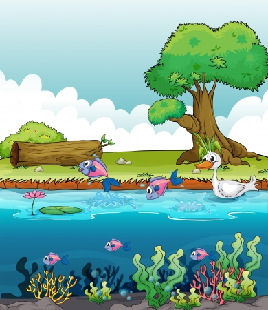 pond water: Illustration of sea creatures with a duck