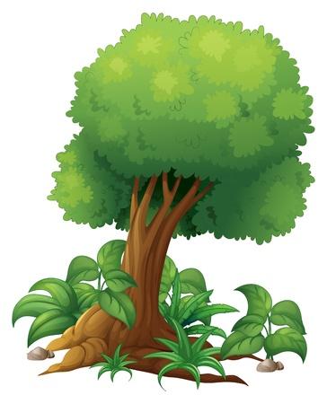 hoog gras: Illustratie van een grote boom op een witte achtergrond