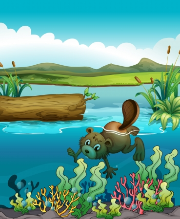 Illustration of a beaver near the coral reefs Stock Vector - 17918381
