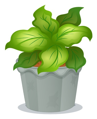 potting soil: Illustration of a green ornamental plant on a white background Illustration