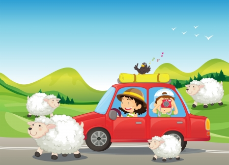 farm cartoon: Illustration of the red car and the sheeps at the road