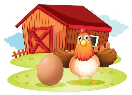 gallina con huevos: Ilustración de una gallina y un huevo en el patio sobre un fondo blanco
