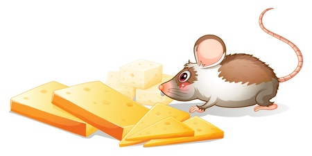 Illustration of the slices of cheese with a mouse on a white background Vector