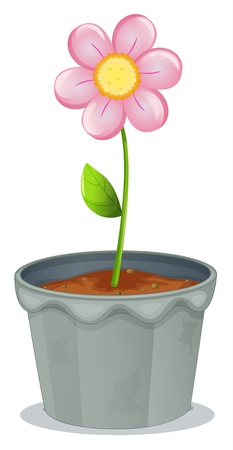 potting soil: Illustration of a pot of plant with a flower on a white background Illustration