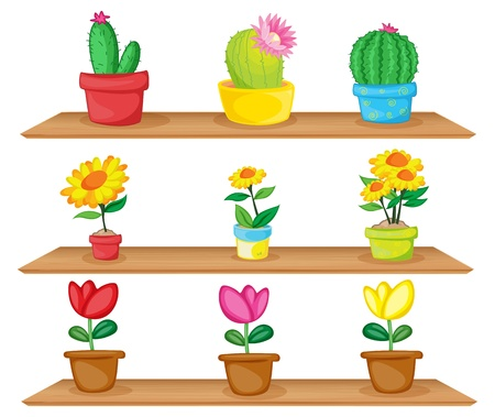 potting soil: Illustration of the wooden shelves with ornamental plants on a white background Illustration