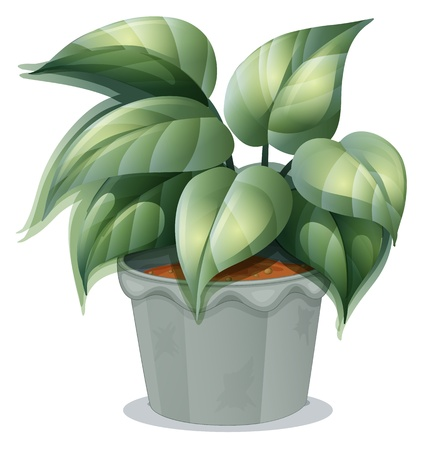 potting soil: Illustration of a plant in a pot on a white background