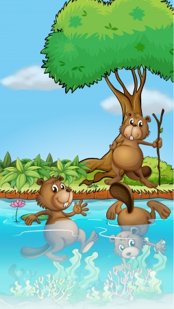 beavers: Illustration of three beavers playing at the river