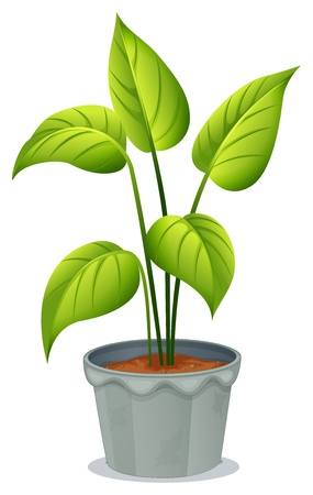petiole: Illustration of a pot of green plant on a white background Illustration