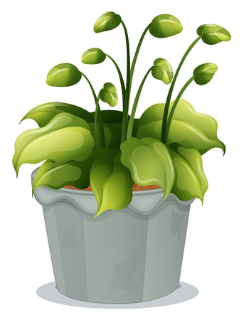 potting soil: Illustration of a green plant in a gray pot on a white background Illustration