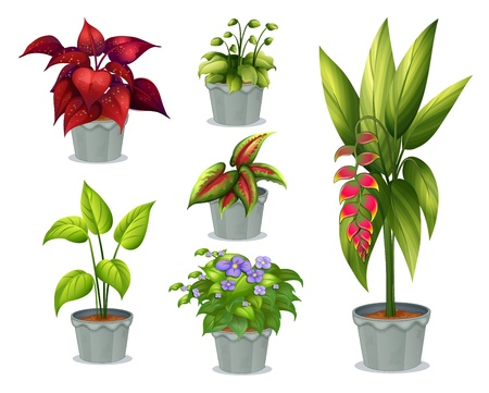 potting soil: Illustration of the six ornamental plants on a white background