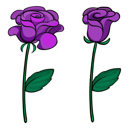 Illustration of two purple roses on a white background Vector