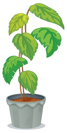 potting soil: Illustration of a green tall plant in a pot on a white background