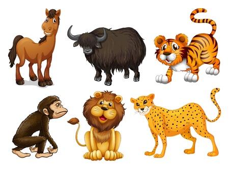 tigre caricatura: Ilustración de los diferentes tipos de animales de cuatro patas en un fondo blanco