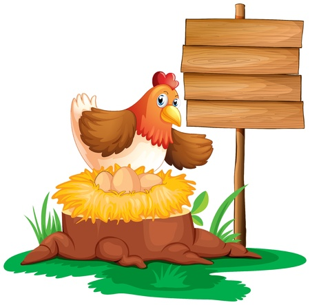 Illustration of a hen laying eggs on a white background Vector
