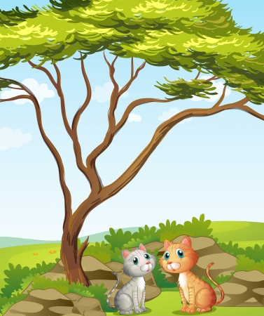 Illustration of two cats in the forest  Stock Vector - 18012573