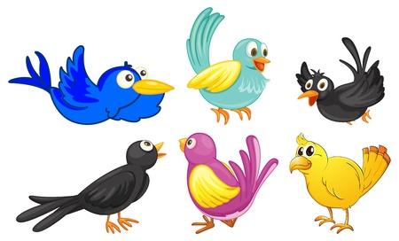 blackbird: Ilustracja ptaków z różnych kolorów na białym tle