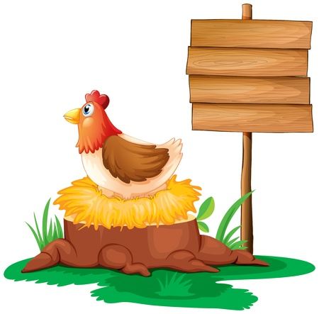 egg laying: Illustration of a hen near the empty wooden signboard on a white background