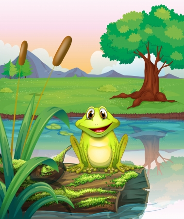 algen: Illustratie van een kikker aan het meer