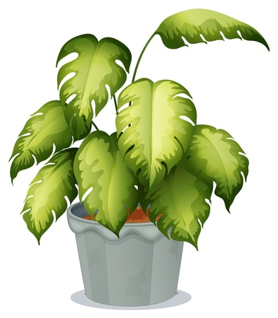 potting soil: Illustration of an ornamental plant in a pot on a white background Illustration