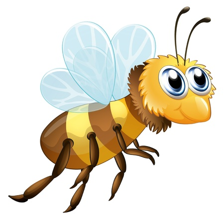 proboscis: Illustration of a six-legged insect on a white background Illustration