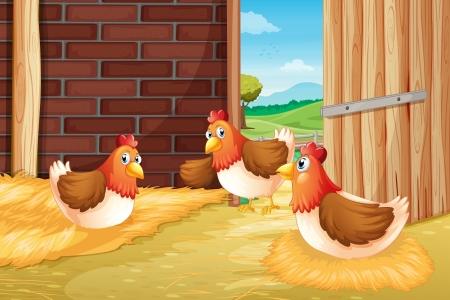 cartoon chicken: Illustration of three chickens nesting  Illustration
