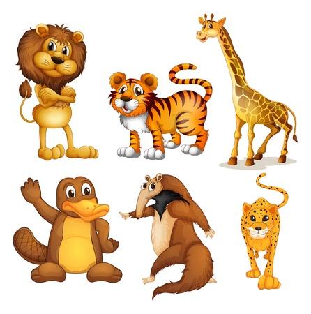 tigre caricatura: Ilustración de los diferentes tipos de animales de tierra sobre un fondo blanco