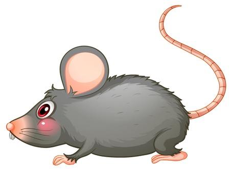 rata caricatura: Ilustración de una rata gris sobre un fondo blanco