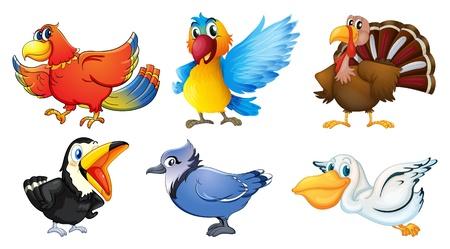 loro: Ilustración de los diferentes tipos de aves sobre un fondo blanco