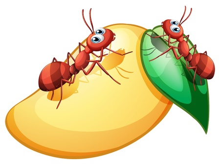 Illustration of a sweet ripe mango with two ants