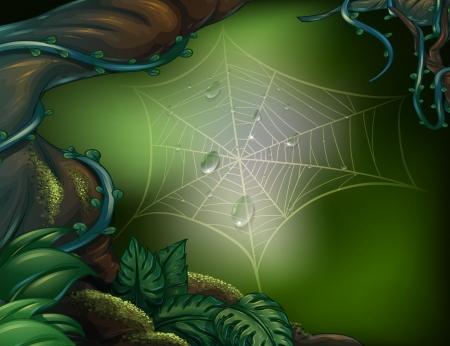 dark jungle green: Illustration of a spider web in a rainforest Illustration