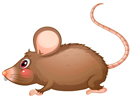 cartoon mouse: Illustration of a rat with a long tail on a white background