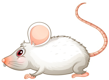 mouse animal: Illustration of a white mouse on a white background