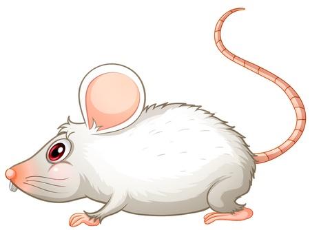 rata caricatura: Ilustraci�n de un rat�n blanco sobre un fondo blanco