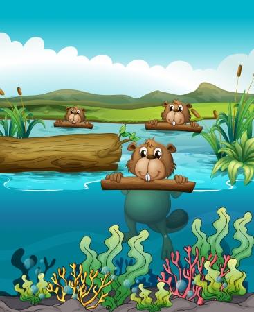 birretes: Ilustración de los tres castores en el río