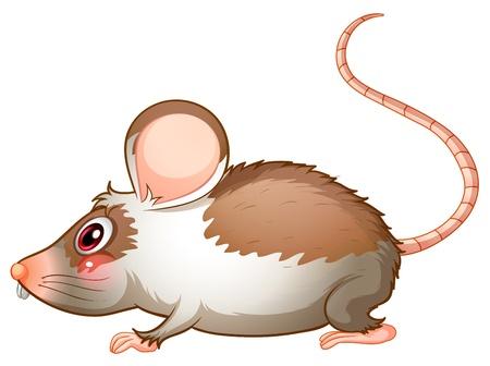 rata caricatura: Ilustraci�n de la vista lateral de una rata en un fondo blanco