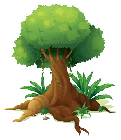 ferns: Illustration of a big tree on a white background