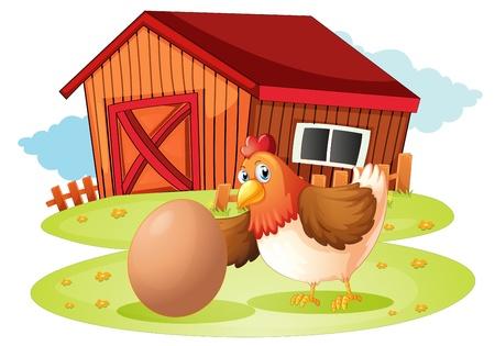gallina con huevos: Ilustración de una gallina con huevo sobre un fondo blanco