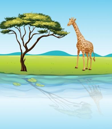 pozo de agua: Ilustración de una jirafa al lado del río