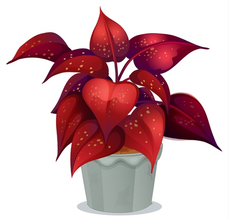 potting soil: Illustrations of a plant with red leaves on a white background