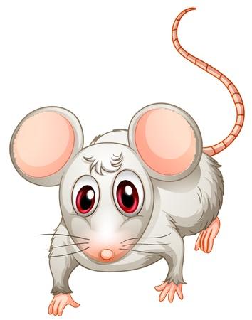 ratte cartoon: Illustration eines vierbeinigen Wesen auf einem wei�en Hintergrund