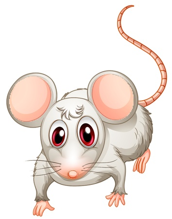 cute mouse: Illustration of a four-legged creature on a white background