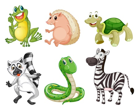 Illustration of the different species of animals on a white background Vector